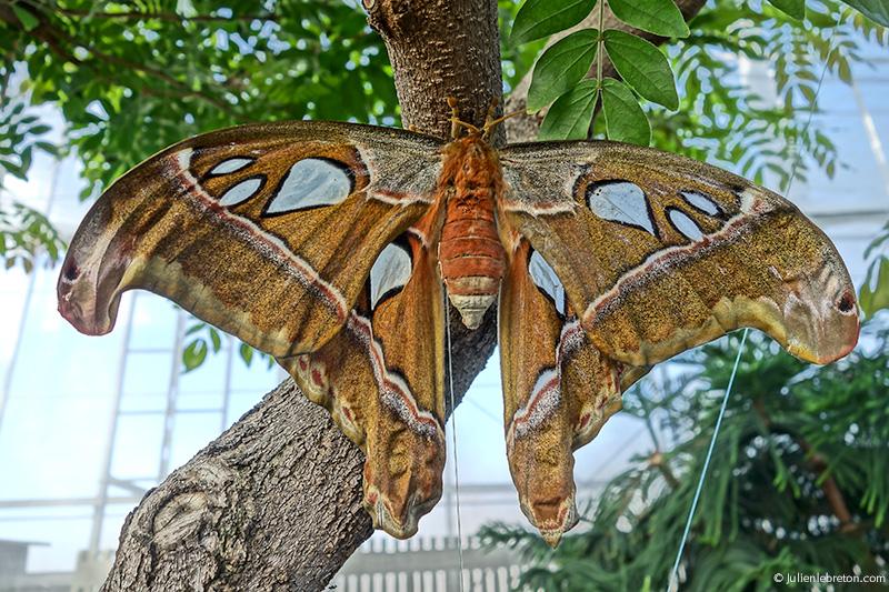 Papillons en libert montr al blog for Papillons jardin botanique 2016