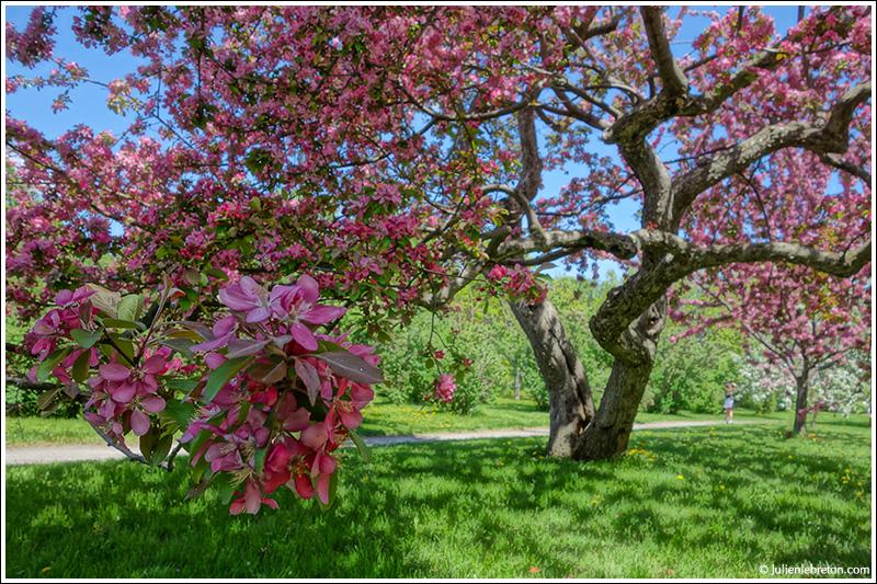 Le printemps au jardin botanique blog for Au jardin de fanny montreal