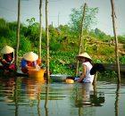 Derlat du Mekong, Vietnam