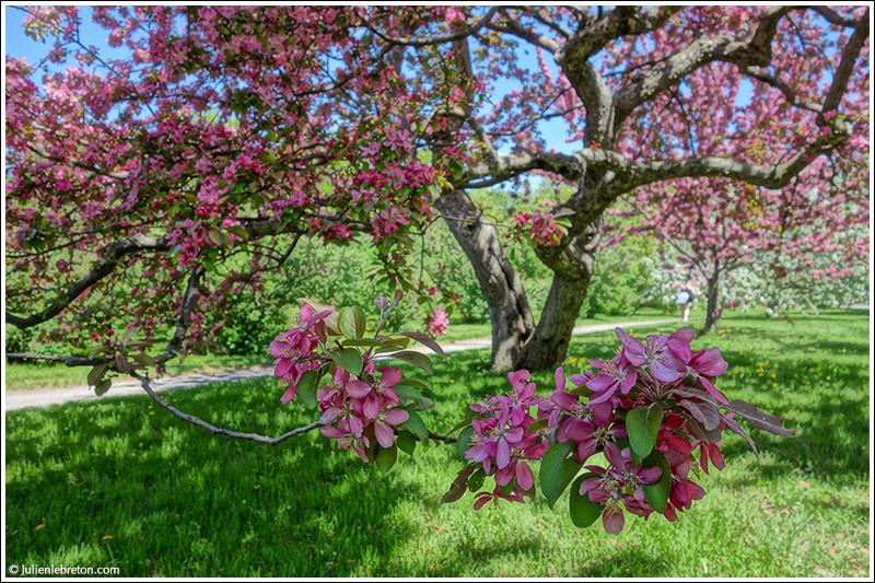 Le printemps au jardin botanique blog - Jardin botanique de montreal heures d ouverture ...
