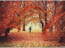 Feuilles d'automne - Québec - par Julien Lebreton
