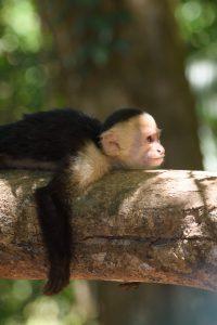 Photo du Costa Rica